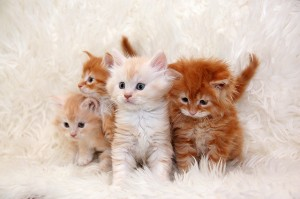 four_red_kitten