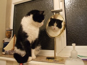 Cat_in_mirror