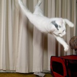 cat_is_jumping