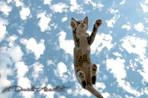 jumps_cat