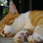 sleeping_cat2