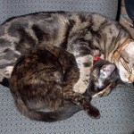 sleeping_cats2