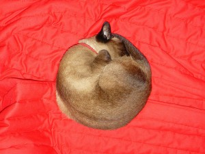 sleeping_in_a_circle