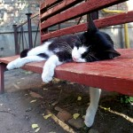 sleeping_ukraine_cat